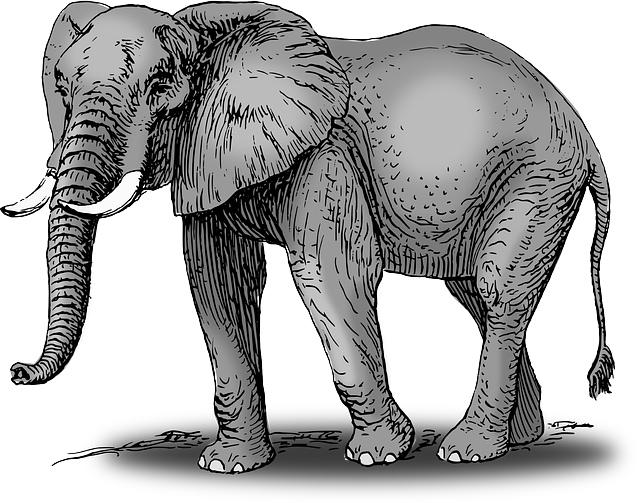 elephant-48027_640