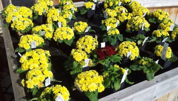 Blumen_besonders1kl
